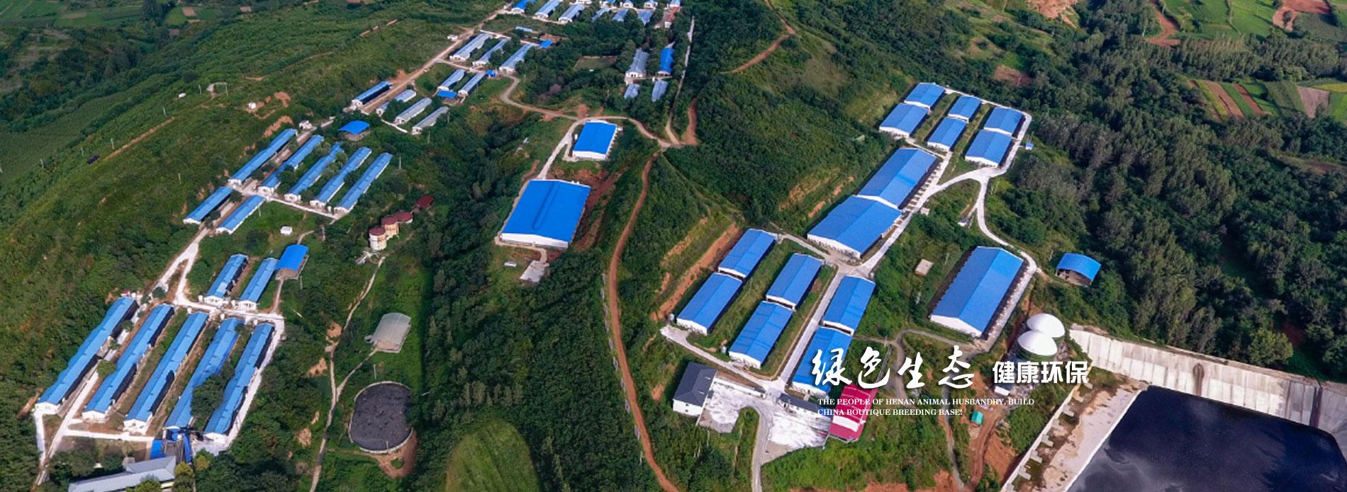 河南kai凯发真人游戏农牧股份有限公司